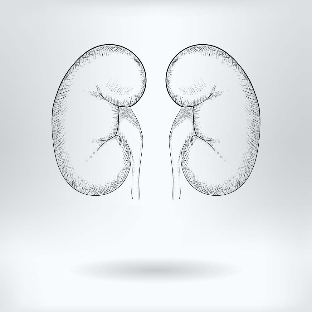 Гломерулонефрит. Диагностика и лечение. Диета при остром и хроническом гломерулонефрите. Профилактика